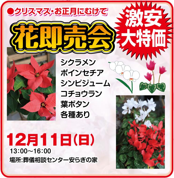 クリスマス・お正月に向けて「花即売会」激安大特価12.11(日)13:00〜16:00