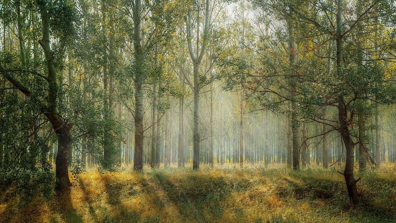 自然葬:樹木葬